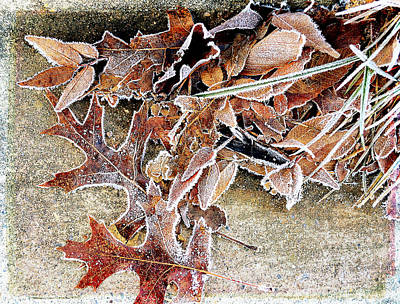 Photograph - Frosty Morn by Michelle Ayn Potter