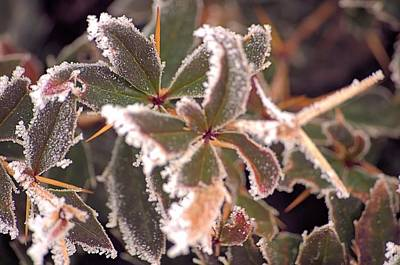 Photograph - Frosty Morning by Dave Woodbridge