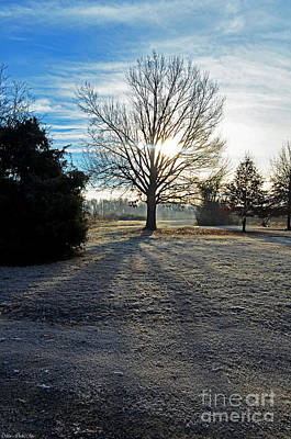 Photograph - Frosty Morning by Debbie Portwood