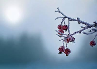 Montana Photograph - Frosty Morning by Jess Williams
