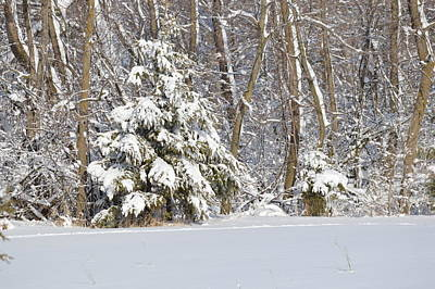 Art Print featuring the photograph Frosty Pine by Dacia Doroff