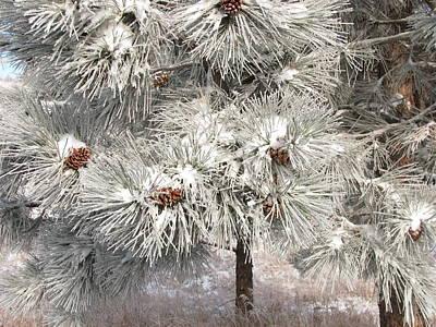 Frosty Pinetree Art Print by Steven Parker