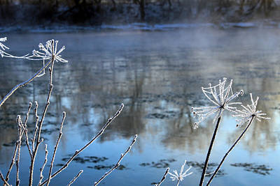 Frosty Webs And Weeds Print by Hanne Lore Koehler