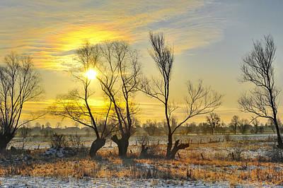 Frosty Winter Tree Illuminated By The Rising Sun Original