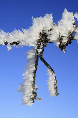 Photograph - Frosty Wire by Haiti Missions