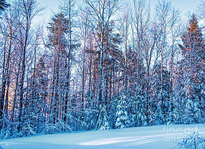 Photograph - Frozen Winter by Alana Ranney