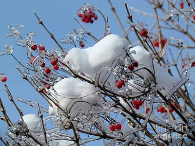 Photograph - Frozen Berries by France Laliberte