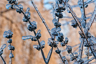 Photograph - Frozen Berries by Les Palenik