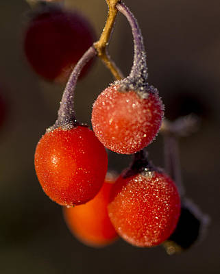 Photograph - Frozen Berries by Ron Roberts