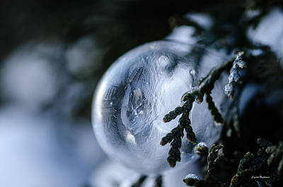 Photograph - Frozen Bubble On A Pine Tree by Crystal Wightman