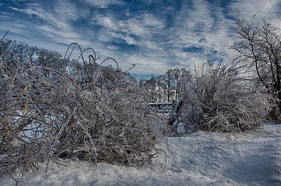 Ringo Photograph - Frozen Bush by Ryan Crane