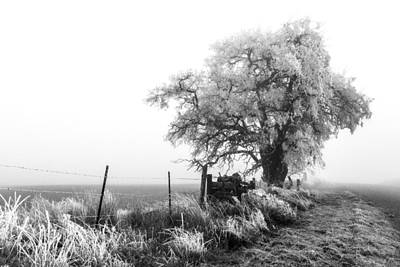 Photograph - Frozen By Fog by Wes and Dotty Weber