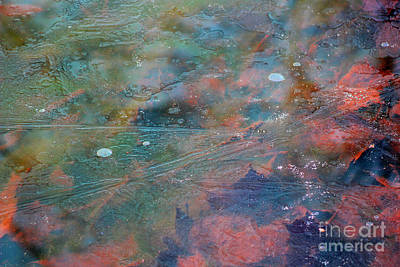 Photograph - Frozen Color Abstract by Karen Adams