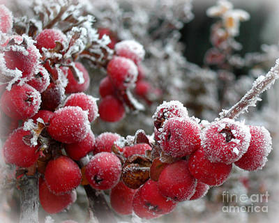 Photograph - Frozen Crimson by Heidi Manly