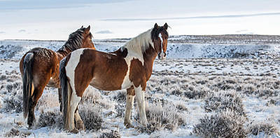 Wild Mustang Photograph - Frozen Dawn by Sandy Sisti