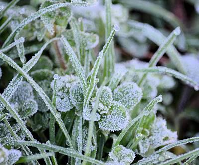 Photograph - Frozen Dew Drops by Maria Urso