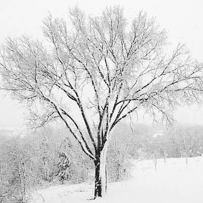Tree Wall Art - Photograph - Frozen Elm In Snow by Kay Pickens