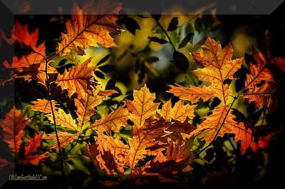 Photograph - Frozen Fall Leaves by LeeAnn McLaneGoetz McLaneGoetzStudioLLCcom