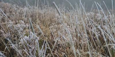 Frozen Field Art Print by Dan Sproul