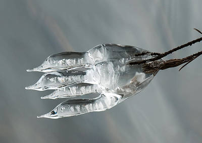 Photograph - Frozen Fish by Lara Ellis
