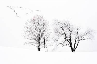 Photograph - Frozen Flight by Emily Stauring