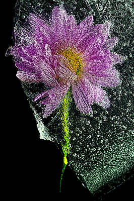 Photograph - Frozen Flower 2 by John Crothers