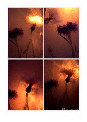 Art Print featuring the photograph Frozen Flowers Collage by Randi Grace Nilsberg