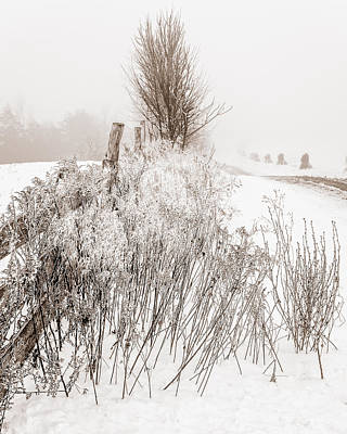 Frozen Fog On A Hedgerow - Bw Art Print