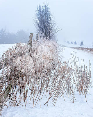 Photograph - Frozen Fog On A Hedgerow by Chris Bordeleau