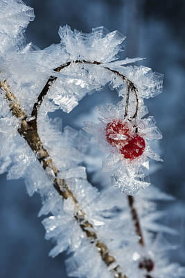 Photograph - Frozen Food by Ted Raynor