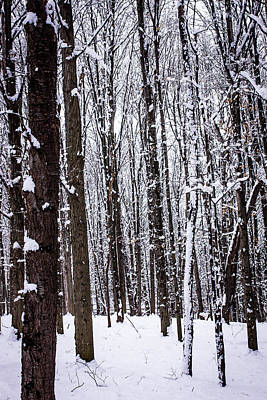 Photograph - Frozen Forest by Sara Frank