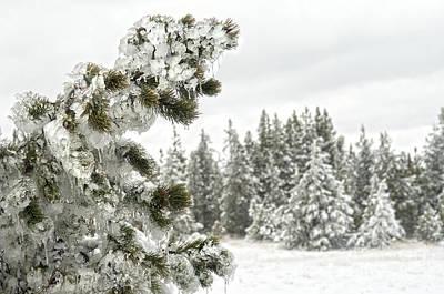 Frozen Forest Art Print by Wildlife Fine Art