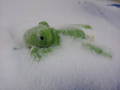 Photograph - Frozen Frog by Zac AlleyWalker Lowing