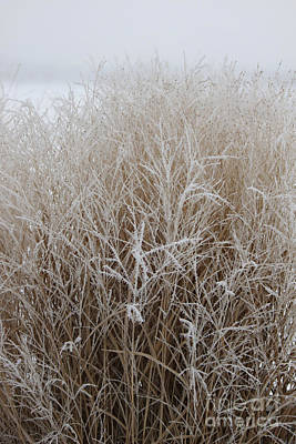 Frozen Grass Art Print by Debbie Hart
