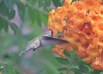 Bird Photograph - Frozen Hummingbird by Naomi Berhane