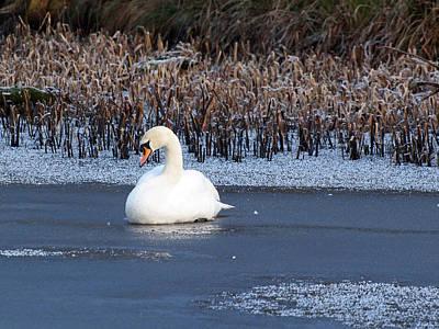 Dunham Massey Photograph - Frozen In by Susan Tinsley