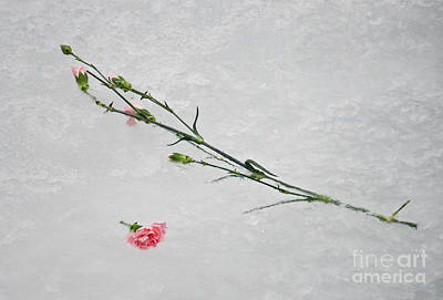 Photograph - Frozen Into The Lake by Gerda Grice