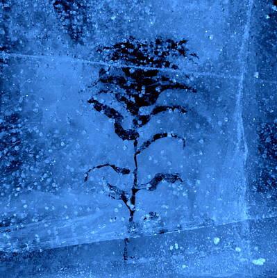Photograph - Frozen by Jeremiah John McBride