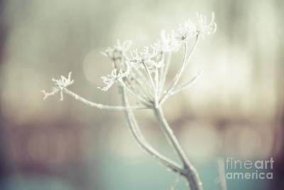 Photograph - Frozen Lace by Cheryl Baxter