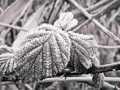 Frozen Leave Art Print by Yvon van der Wijk