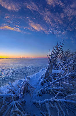 Red Leaves Snow Wall Art - Photograph - Frozen Moments In Time by Phil Koch