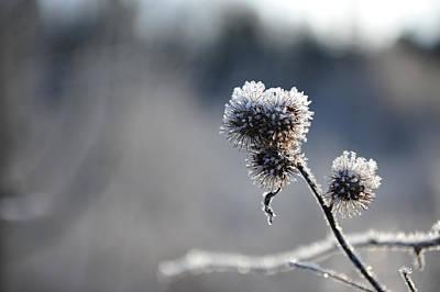 Photograph - Frozen by Randi Grace Nilsberg