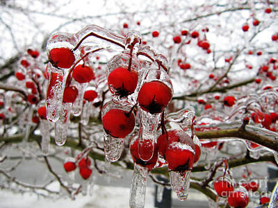 Red Photograph - The Frozen Red by A R