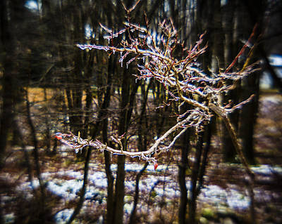 Photograph - Frozen Rose by Alex Potemkin