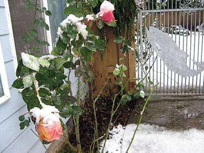 Photograph - Frozen Rose by Marlene Rose Besso
