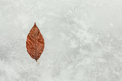 Photograph - Frozen Seasons by Karol Livote