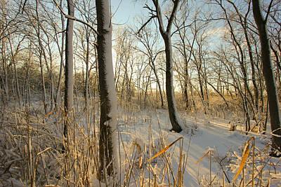 Indiana Landscapes Photograph - Frozen Swamp At Golden Hour by Jackie Novak