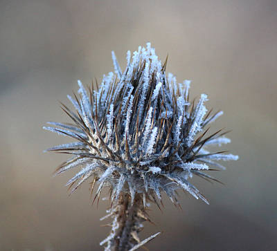 Photograph - Frozen Thistle by Jackie Farnsworth