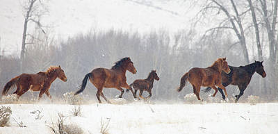 Wild Horses Photograph - Frozen Track by Mike  Dawson