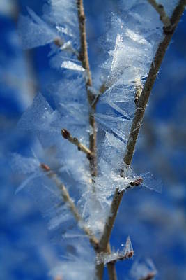 Photograph - Frozen Tree by Alicia Knust